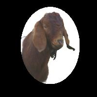 Smerrills Farm Logo